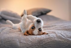 Pet-friendly bedroom tips and ideas